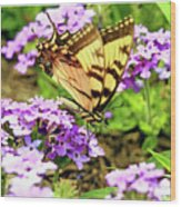Yellow Eastern Tiger Swallowtail Series Wood Print