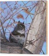 American Red Squirrel Wood Print