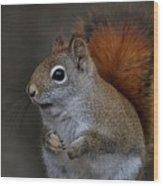 American Red Squirrel Portrait Wood Print