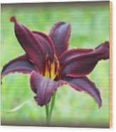 American Revolution With Vignette - Daylily Wood Print