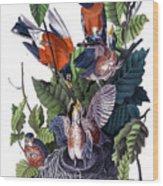 American Robin Audubon Birds Of America 1st Edition 1840 Octavo Plate 142 Wood Print