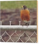 American Robin  In Spring          March            Indiana Wood Print