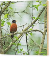American Robin On Tree Branch Wood Print