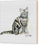 American Short Hair Cat Wood Print