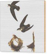 American Swift Wood Print