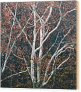 American Sycamore # 2 Wood Print