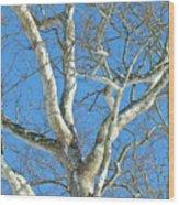 American Sycamore - Platanus Occidentalis Wood Print