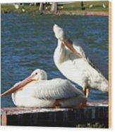 American White Pelican 001 Wood Print