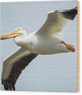 American White Pelican Flyby  Wood Print