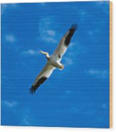 American White Pelican Wood Print