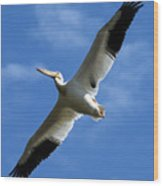 American White Pelican Wings Wood Print