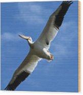 American White Pelican Wings Wood Print
