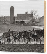 Amish Agriculture  Wood Print