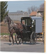 Amish Buggy And High Stepper Wood Print