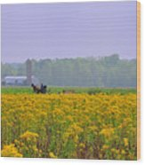 Amish Buggy And Yellow Field Wood Print