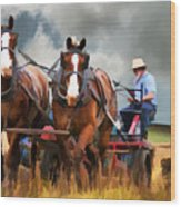 Amish Farmer Wood Print by Tom Griffithe