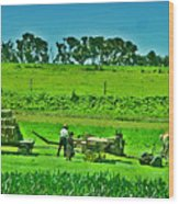 Amish Gathering Hay Wood Print