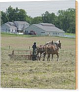 Amish Girl Raking Hay Photo Wood Print