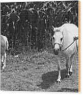 Amish Girl With Her Colt Wood Print