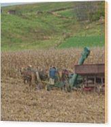 Amish Harvest In Ohio  Wood Print