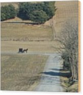 Amish Horse And Buggy On A Country Road Wood Print