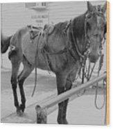 Amish Horse Wood Print