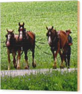 Amish Horse Team Wood Print