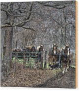Amish Horses In Harness Wood Print