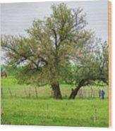 Amish Man And Tree Wood Print