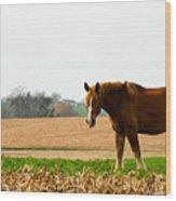 Amish Work Horse Wood Print