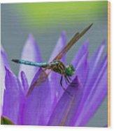 Among The Lilies Wood Print