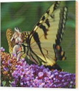 Amorous Butterfly And Faerie Wood Print