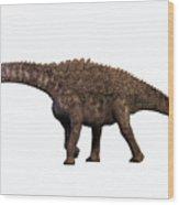 Ampelosaurus On White Wood Print