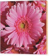 Amsterdam In Pink Wood Print