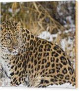 Amur Leopard In A Snowy Forrest Wood Print