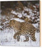 Amur Leopard Walks In A Snowy Forest Wood Print