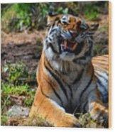 Amur Tiger 7 Wood Print