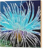 An Abstract Scene Of Sea Anemone 1 Wood Print