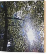 An Alabama Sun Wood Print