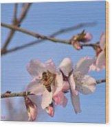 An Almond Tree Blooming Wood Print