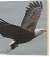 An American Bald Eagle Soaring Wood Print