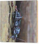 An Ant's Haul Wood Print