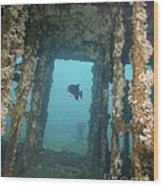 An Atlantic Spadefish Swims Amongst Wood Print