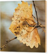 An Autumn Leaf Suspended Wood Print
