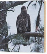 An Eagle Gazing Through Snowfall Wood Print