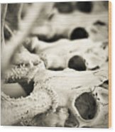 An Echo Of Mortality Wood Print