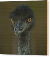 An Emu At The Lincoln Childrens Zoo Wood Print