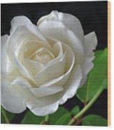 An English Rose Wood Print