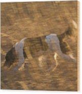 An English Springer Spaniel Points Wood Print