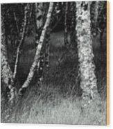 An Irish Copse Wood Print